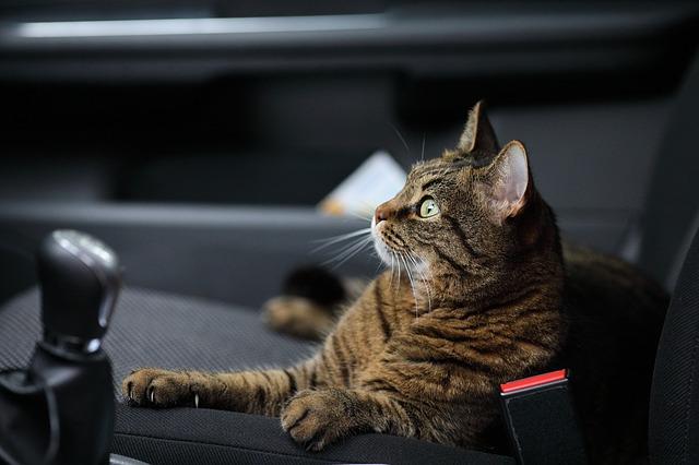 旅猫リポート 感想