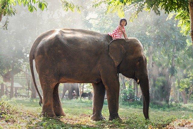 象と少女 きいろいゾウイメージ