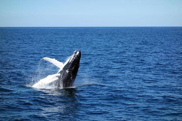 晴天の迷いクジラ